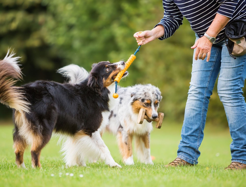 Integratori e cani sportivi: come scegliere?