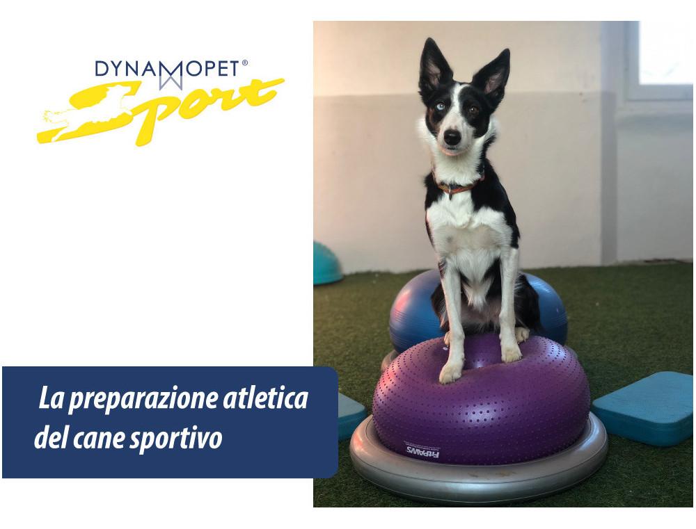 La preparazione atletica del cane sportivo