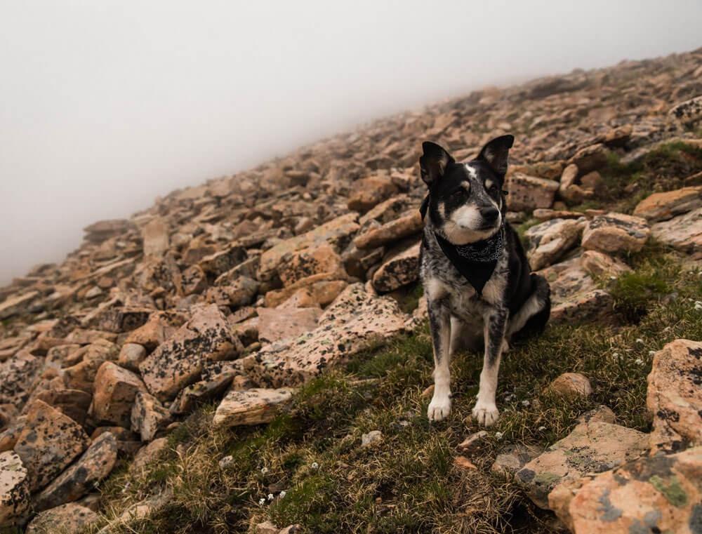 Prevenzione della Leishmaniosi Canina: Scopri Quanto è importante