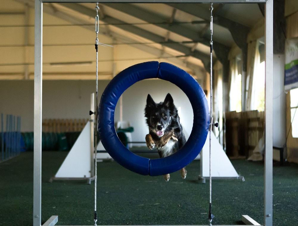 Condroprotettori per cani: cosa sono e a cosa servono